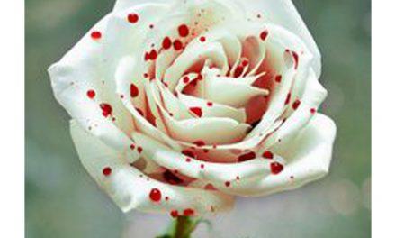Idée d'achat: Chrysantheme Arc-en-ciel et Rose Sanglante